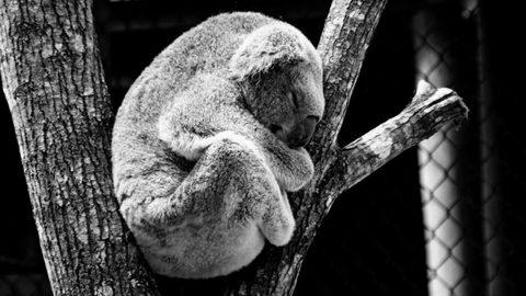 Gastbeitrag: Wie Schlaf deine mentalen Fähigkeiten beeinflusst