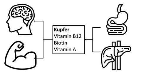 eisenstoffwechsel kofaktoren