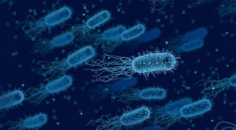 Schädliche Bakterien haben einen Sauerstoffsensor, der sie aktiviert