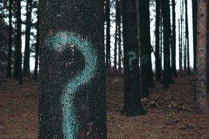 Ein Wald mit Bäumen und Fragezeichen darauf