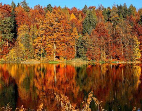 Gesund durch den Herbst (4)