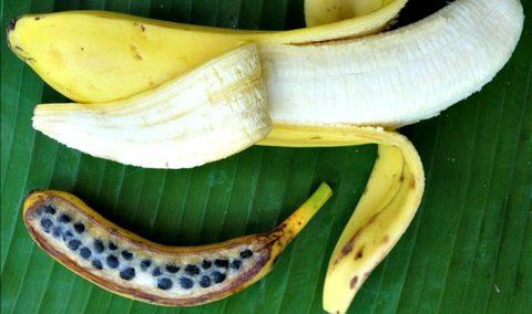 Banane Gentechnik nein DAnke