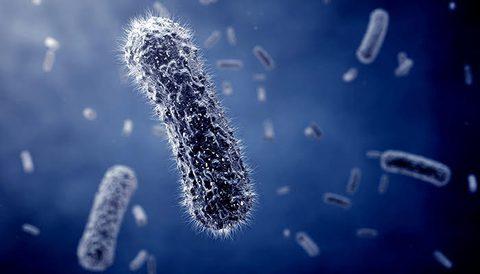 Warum kommen immer häufiger Clostridium difficile Infektionen vor?
