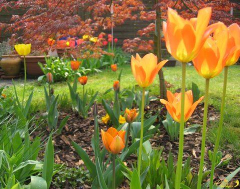 Warum Du dieses Jahr unbedingt Blumen pflanzen musst