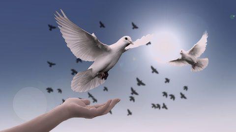 Was, wenn es Reinkarnation gibt? Taube fliegt in den HImmel